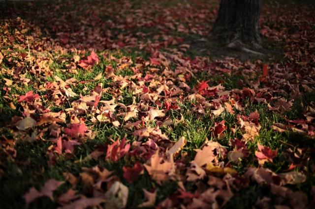 Autumn-002