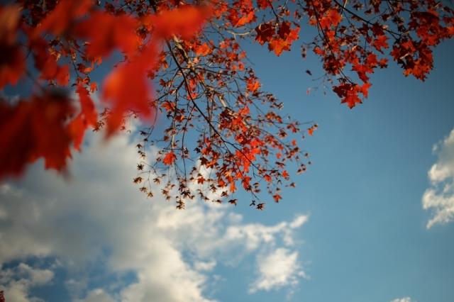 Autumn-005