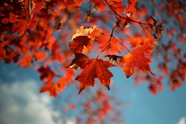 Autumn-006