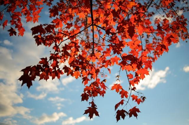 Autumn-007